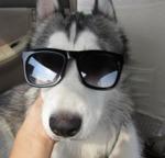 Harry in sunglasses